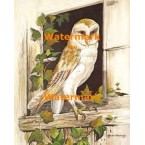 Owl At Window  - #XS3669  -  PRINT