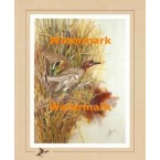 Green Winged Teal:  Marsh Reed Duckport  - XS12202  -  PRINT