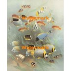 1.  School of Fish  - #XS13505  -  PRINT